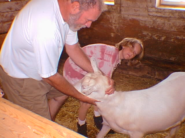 Trimming Junior The Goat's