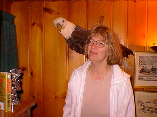 Real Stuffed Bald Eagle